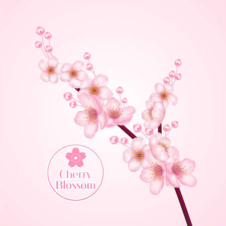 Pink Cherry Blossom, sakura  illustration. 版權商用圖片