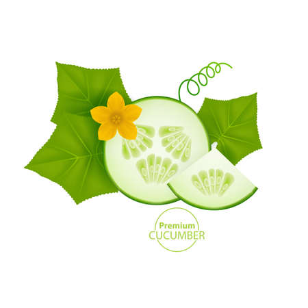 Realistic cucumber with green stem leaves and flower.