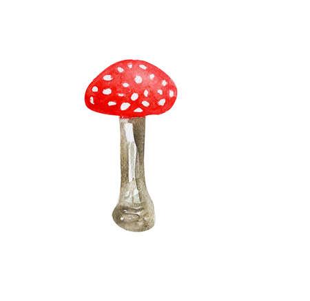 poisonous: Amanita, poisonous mushroom, hand drawn watercolor Stock Photo