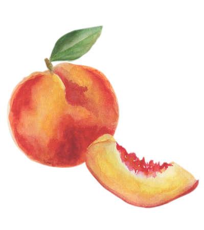 Peach hand drawn watercolor, sur fond blanc. Banque d'images - 76777207