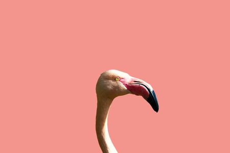 Pink Flamingo Profile on a Pink Background.