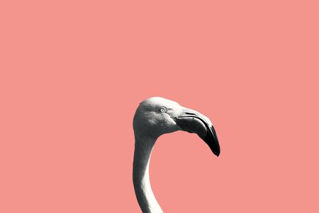 Black and white flamingo on a pink background.