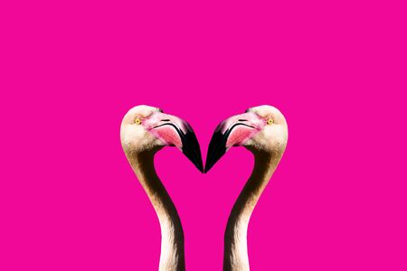 3D illustration of pink flamingos facing each other with pink background