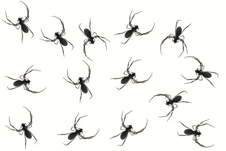 Many Black Spiders on a White Background