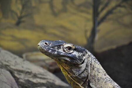 Close up Photo of Lizard Looking at the Camera