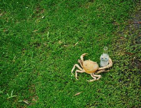 A Concept Image of a Crab Holding an Empty Bottle of Beer. 版權商用圖片
