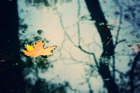 Yellow Autumn Leaf in a Lake on a Rainy Day