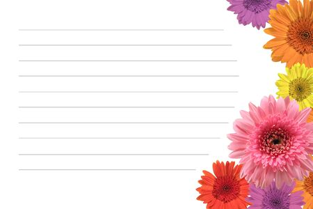 plantlife: daisy flowers on white space for messages