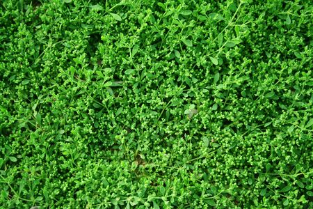 maintained: green leaf texture