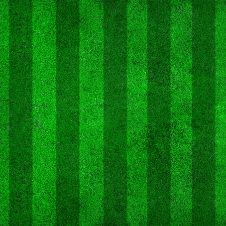 football pitch: soccer field with lines on grass