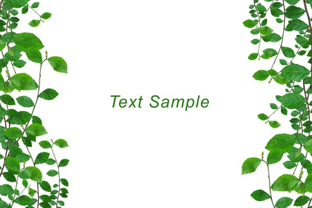 space text: Green leaves frame with space for message