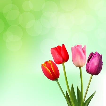 Beautiful tulips on green background  photo