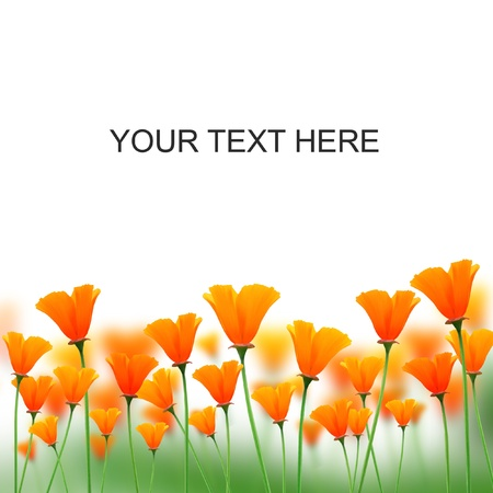plantlife: orange color flowers on white space for messages  Stock Photo