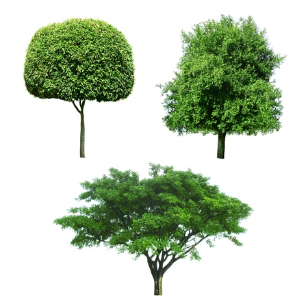 collection of Trees isolated