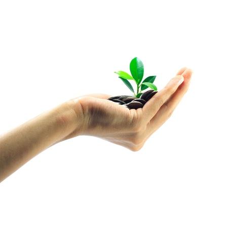 peque�a planta de crecimiento de la pila de monedas en la mano