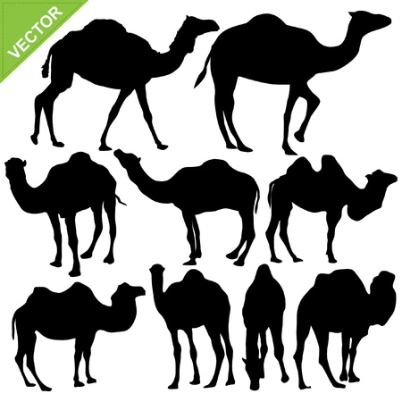cartoon camel: Camels silhouettes collections Illustration