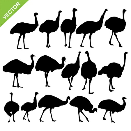 Ostrich silhouettes collections Stock Vector - 16028094
