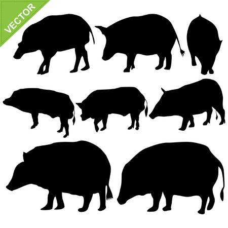 Boar silhouettes vector collections Stock Vector - 17372608