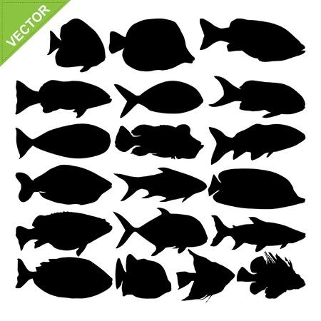 fresh salmon: Fish silhouettes vector Illustration