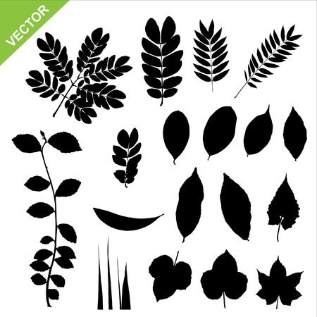 leaves vector: Set of silhouette leaves vector
