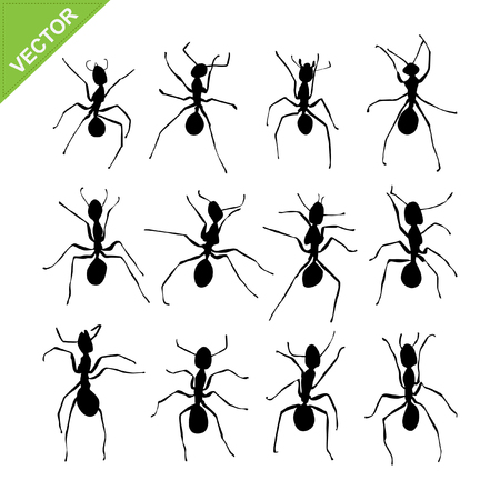 ants: Ant silhouettes
