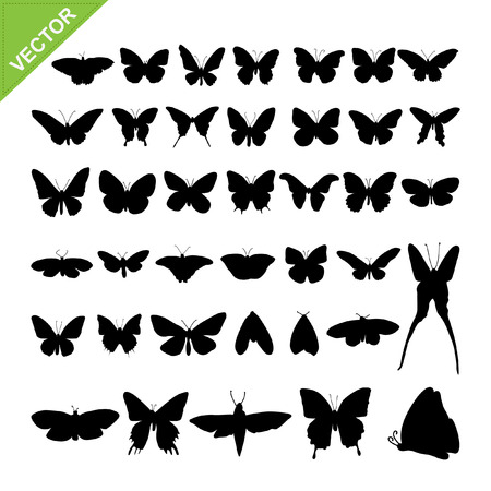 Butterflyl silhouettes vector Vector