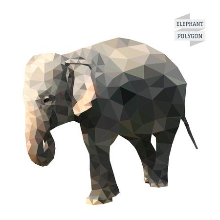 asian elephant: Elephant polygon vector Illustration