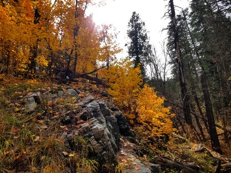 Yellow fall leaves above a dark rock outcropping