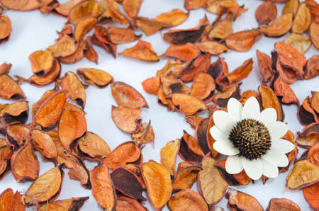 Dried orange leaves scattered on a table with a big white flower Stock Photo