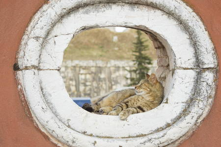 window opening: Young cute cat sleeping in a rounded window opening of old red wall