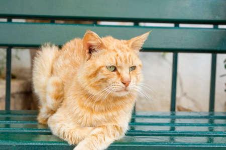 ojos verdes: Tigre coloreado ojos verdes gato sentado en un banco verde