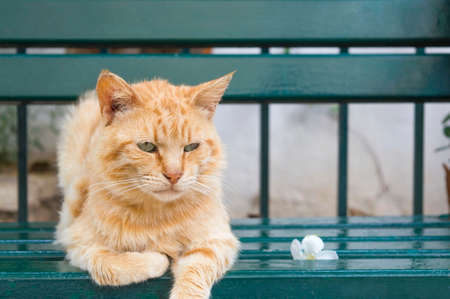 green eyes: Tiger colored green eyes cat sitting  on a green bench next to a flower Stock Photo