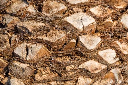 tree bark: Palm tree bark pattern natural background Stock Photo