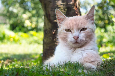 Portrait of a beautiful cat lying in the grass hiding from the summer heat in the shade of a tree