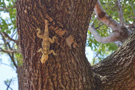 lizzard: Lizard on the tree in cold