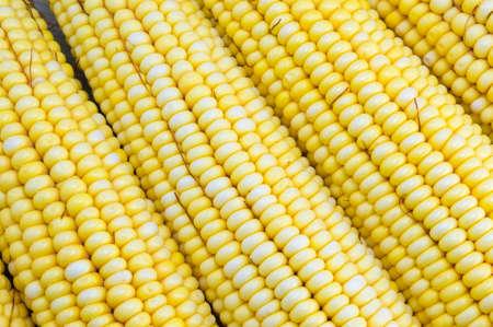 corn yellow: Mazorcas de ma�z amarillo escogidas frescas se cierran para arriba
