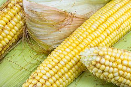 corn yellow: Parcialmente revelaron mazorcas de ma�z amarillo fresco apilan Foto de archivo