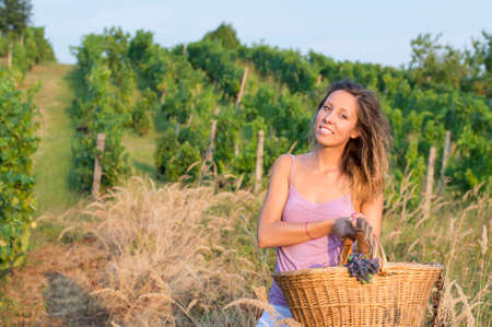 wicker work: Young happy brunette girl in grape harvest with big wicker basket for storing grapes. Working in the field
