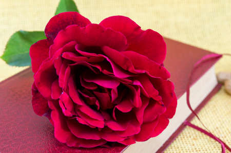 closed book: Romantic red rose on a closed book