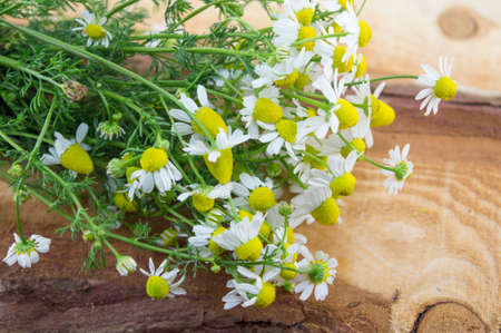 chamomile flower: Fresh and natural chamomile flower on a wooden board Stock Photo