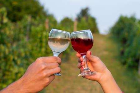 tomando alcohol: Hembra y macho mano que tintinean los vidrios en la vi�a, mientras que beber vid. Celebrando la cosecha de uva Foto de archivo