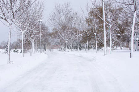 heavy snow: park road covered in heavy snow during heavy winter Stock Photo