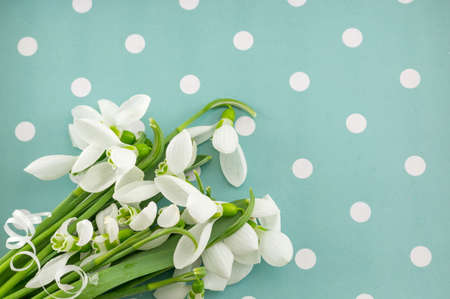 green and white: Fresh snowdrops bouquet on blue dotted background