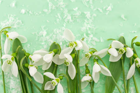 changing seasons: Fresh snowdrops on green background. Welcome spring