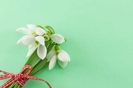 green backgrounds: Fresh snowdrops bouquet with a ribbon on soft background