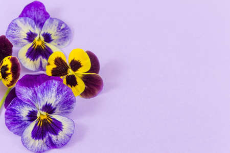 Violet and yellow flowers on purple background