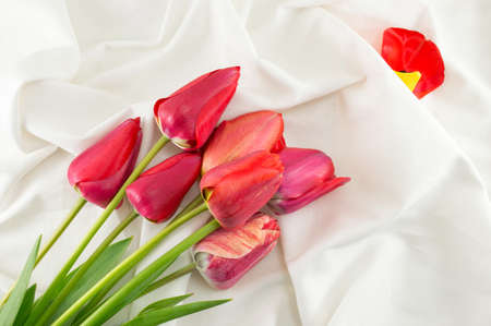 red tulips: Red tulips on a silky white fabric Stock Photo