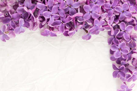 Purple lilac flowers on white textile background Imagens