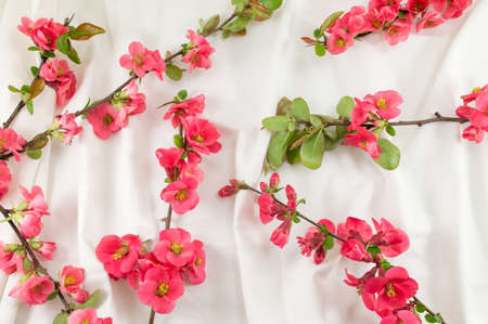 white silk: Rosa rugosa flowers on white silk fabric