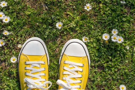 Yellow sneakers in a dasiy field. First person view Stock Photo